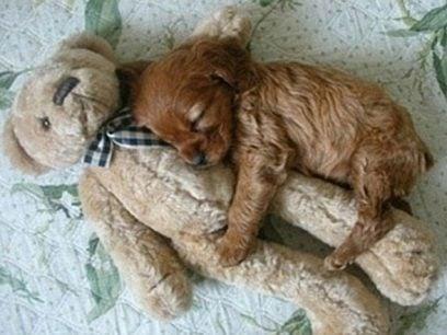 24 Hunder i søte og morsommme sovestillinger.