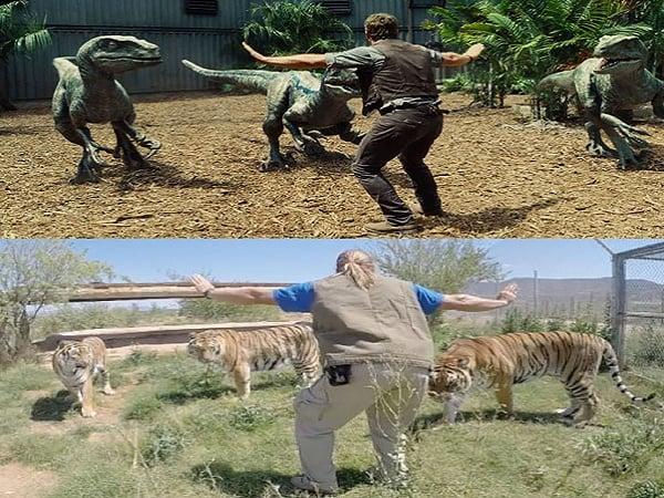 20 Bilder fra dyreparker over hele verden som gjenskaper Velociraptor scenen fra Jurassic World filmen.
