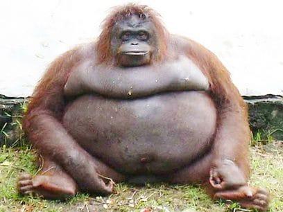 Veldig gode grunner til at alle bør skaffe seg en apekatt