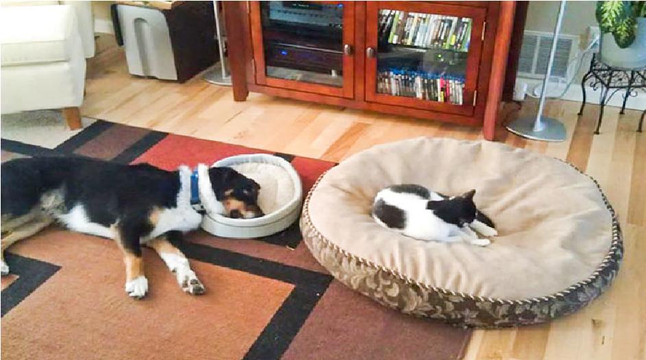 12 bevis på at katter KUN bryr seg om seg selv!