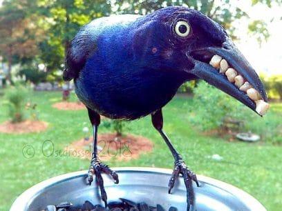 Damen satt opp kamera i matskålen til fuglene - Helt vanvittige bilder ble resultatet!