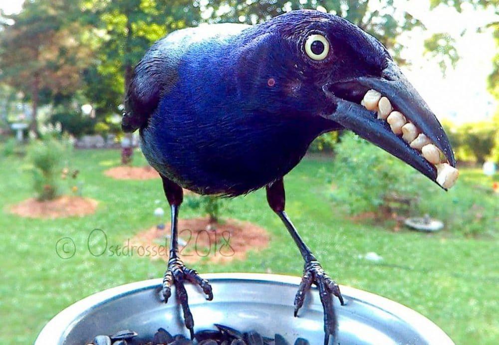 Damen satt opp kamera i matskålen til fuglene – Helt vanvittige bilder ble resultatet!