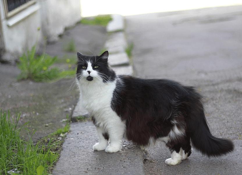 AKKURAT NÅ: Arrogant katt gadd ikke hilse på eieren sin når de møttes tilfeldig på gaten