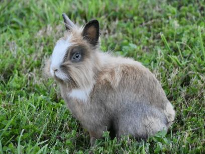 En kaninfot kan bringe lykke på neste jobbintervju