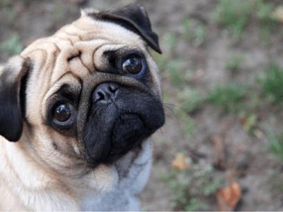 Forvirret hund tror han heter