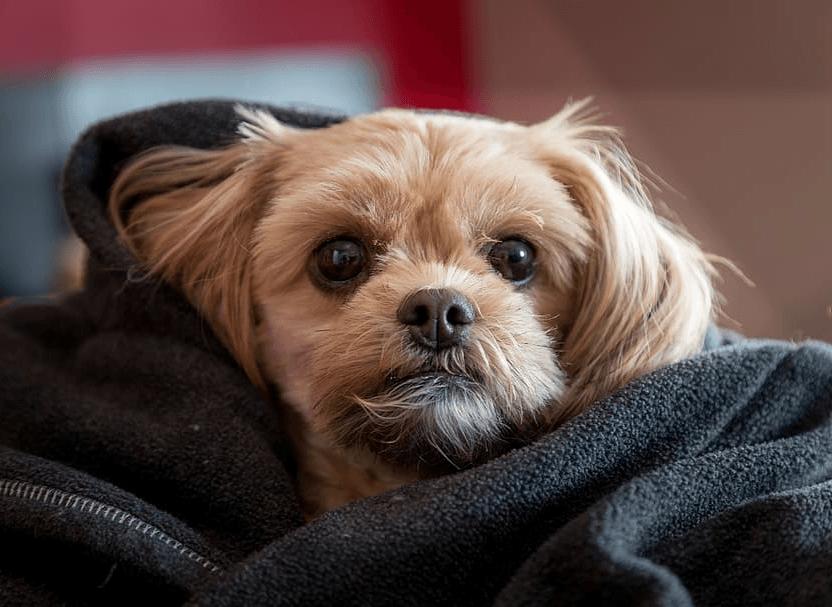 FORSKNING: Folk som ikke liker hunder har ofte psykopatiske trekk