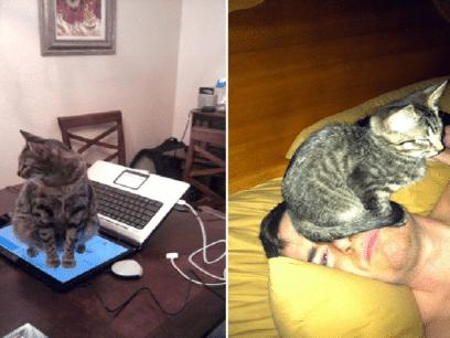17 bilder som beviser at alle katter er NOEN FORBANNA DRITTSEKKER!