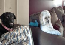 hunder-oppførsel-morsomme-bilder